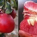 Bưởi Đỏ ( Bưởi Luân Văn ) cây trồng làm giàu không khó
