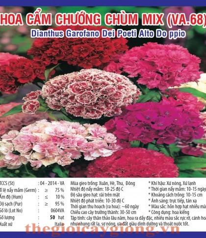 cam chuong chum va64