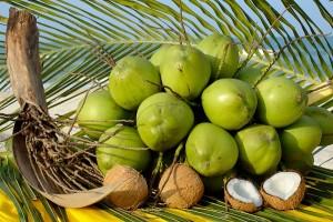 giống cây dừa xiêm