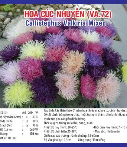 hoa cuc nguyen va72