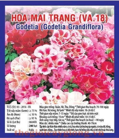 hoa mai  trang va18