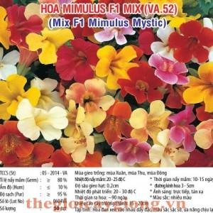 hoa mimulus va52