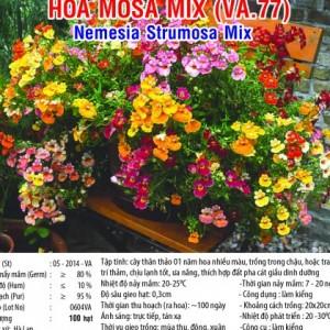 hoa mosa mix va67