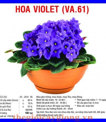 hoa violet