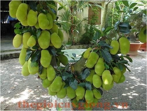 Image result for cây ăn quả