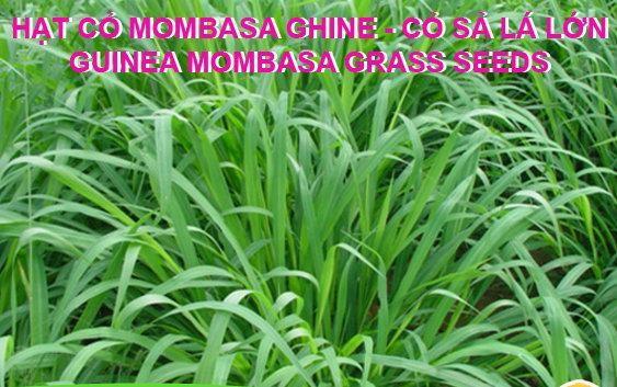 giong-co-guinea-mombasa