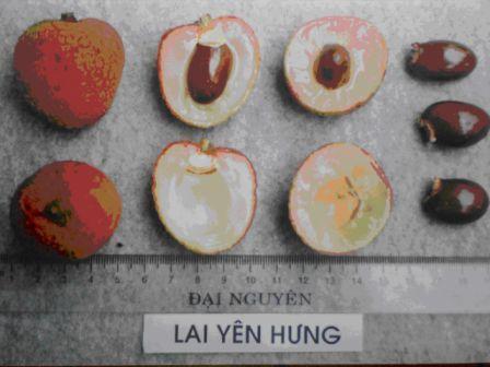 vai Yen Hung 3