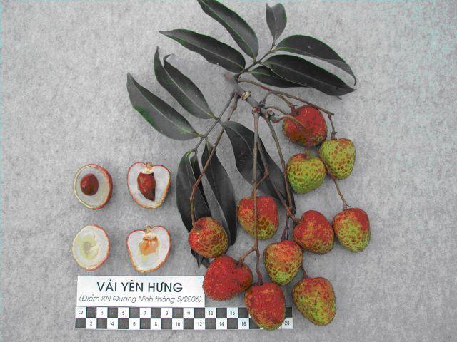 vai yen hung 5